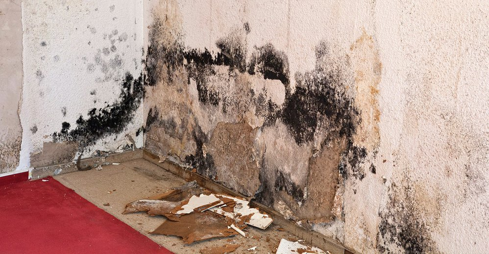 Mold Removal Rockford cover