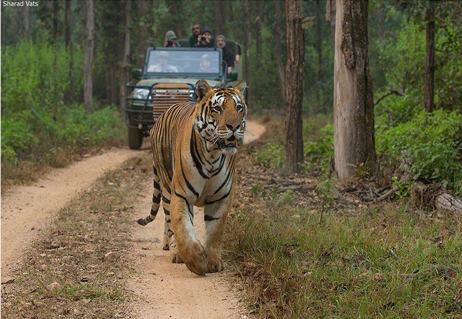 Nature Safari India Private Limited cover