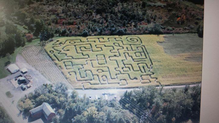 Monaco Corn Maze & Fall Festival cover