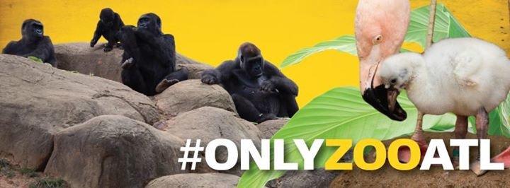 Zoo Atlanta cover