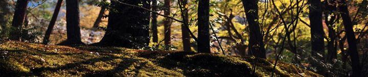 Gelbert, Fullbright & Randolph Forestry Consultants, PLLC cover