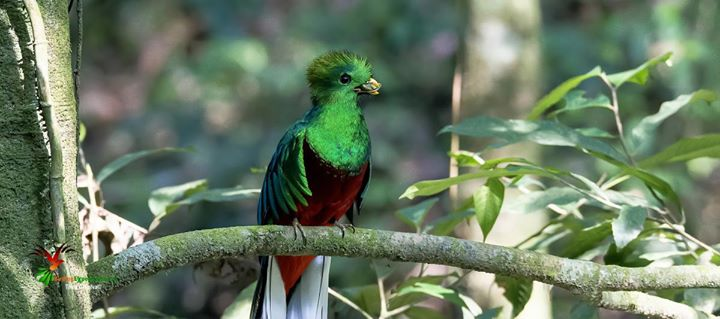 Birdwatching Guatemala cover