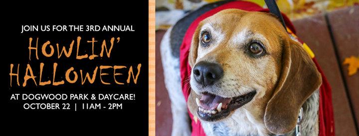 Gainesville Pet Rescue cover