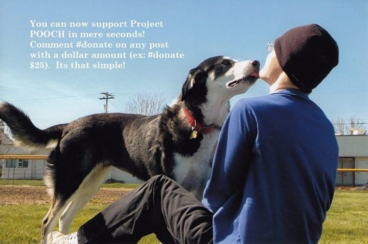 Project Pooch cover