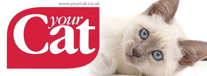 Your Cat Magazine cover