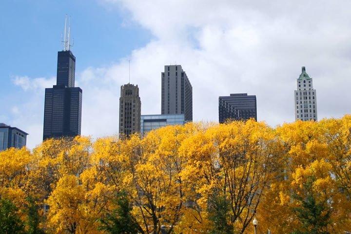 Chicago Parent cover