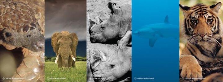 WWF Verdens naturfond cover