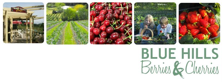 Blue Hills Berries and Cherries cover