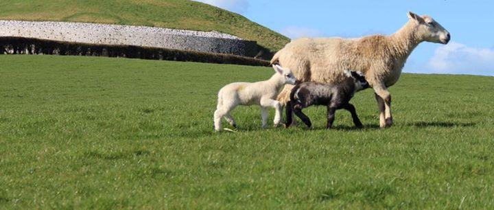 Newgrange Farm cover