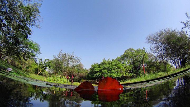 Fundación Jardín Botánico de Maracaibo cover