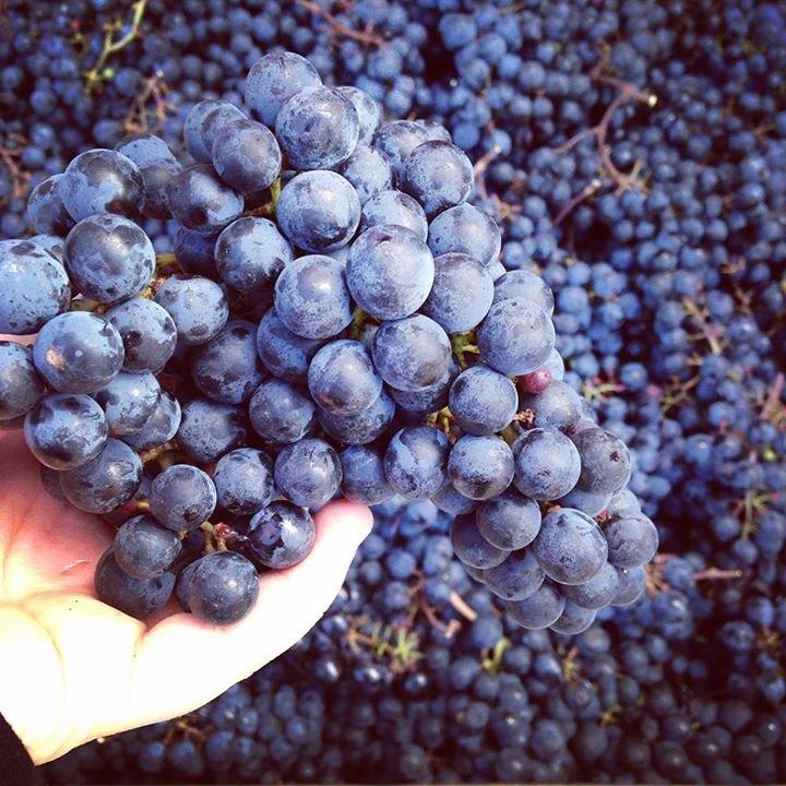 Unionville Vineyards cover