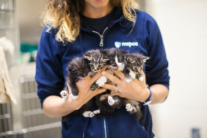 MSPCA-Angell cover