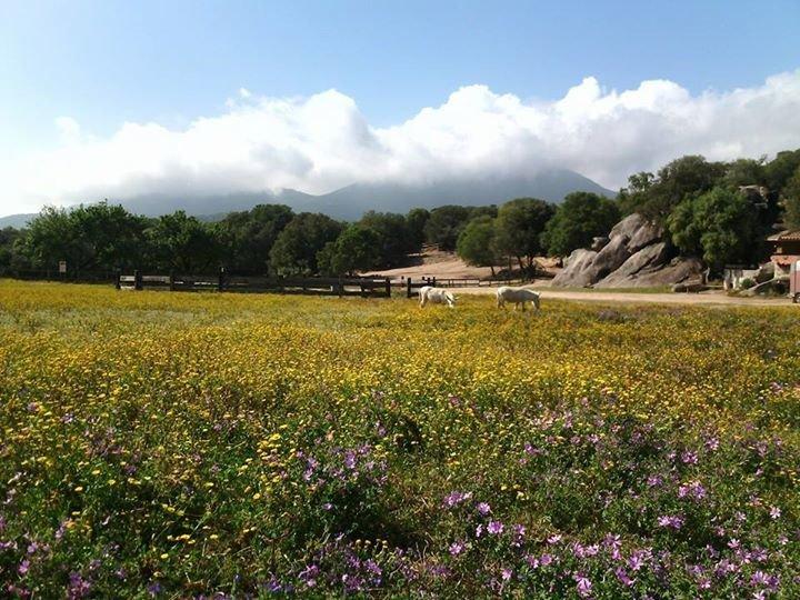 Le Parc Naturel d'Olva cover
