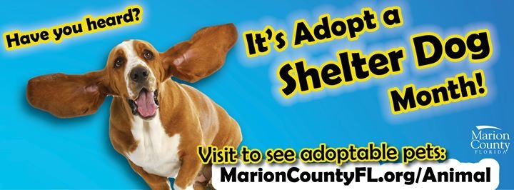 Marion County Animal Services cover