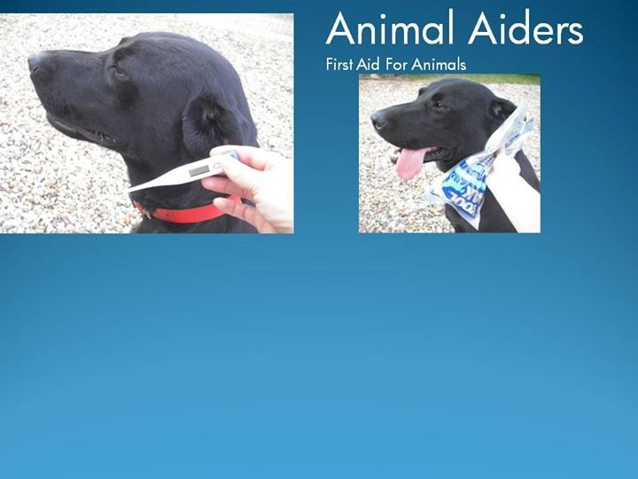 Animal Aiders cover