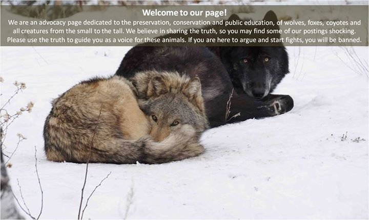 Colorado Wolf and Wildlife Center cover