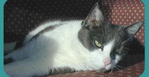 Cozy Cat Veterinary Hospital cover
