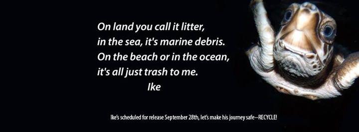 Tybee Island Marine Science Center cover