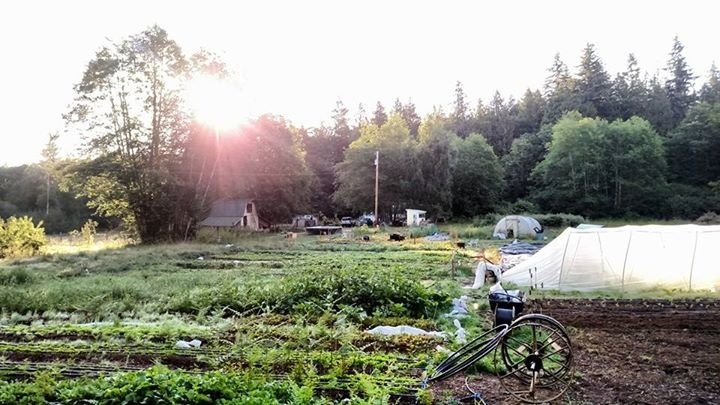 Adalyn Farm cover