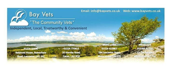 Bay Vets Ltd cover