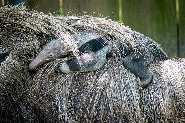 Houston Zoo cover