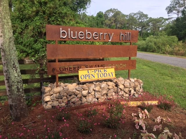 Blueberry Hill Farm cover