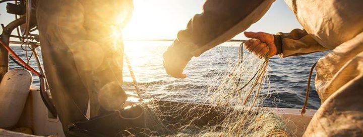 MSC en France - Marine Stewardship Council cover