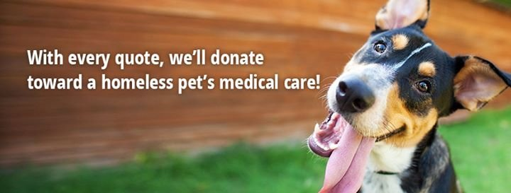 Healthy Paws Pet Insurance cover