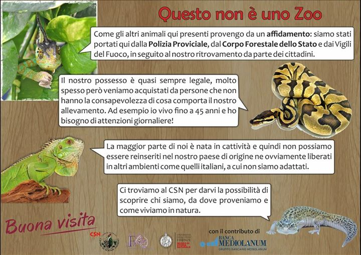 Fondazione Paolo Malenotti cover