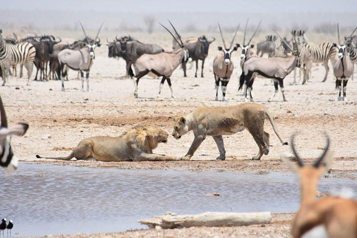 Bocian Safaris cover