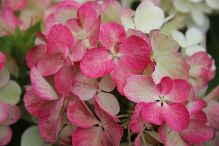 Blumen Wilking blumen wilking sudbrackstr 106 bielefeld 33613 germany