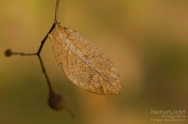 NaturLicht Fotografie cover