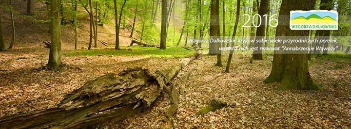 Wzgórza Dalkowskie cover