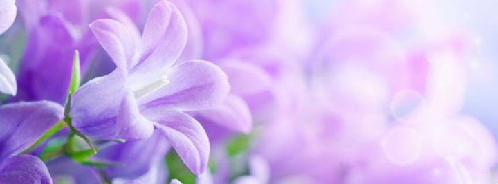La Vie en Rose Florist Beecroft cover