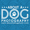 About A Dog Pet Photography