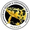 Panama Amphibian Rescue and Conservation Project