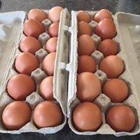 M&J Poultry