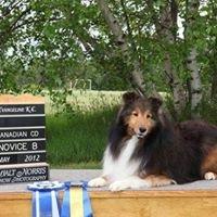 Wyndenfog Boarding Kennel and Dog Obedience Training