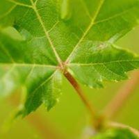 Treefort