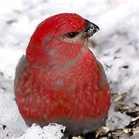 Red Bird Beads