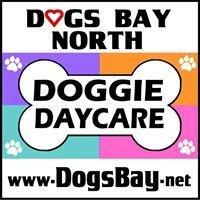 Dogs Bay North Doggie Daycare