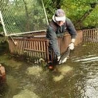 Hood Canal Salmon Enhancement