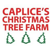 Caplice's Christmas Tree Farm, Skeheenarinky
