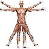 Bodyfix Physiotherapy & Massage
