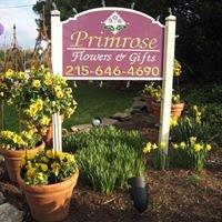 Primrose Extraordinary Flowers