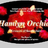 Hamlyn Orchids