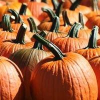 Cedar Rock Fall Fest & Pumpkin Patch