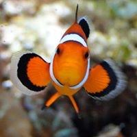 Nemo's World, Edinburgh