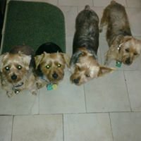Jenny's Yorkies & Dog Grooming Spa