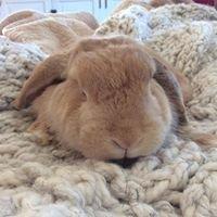 Rabbitopia